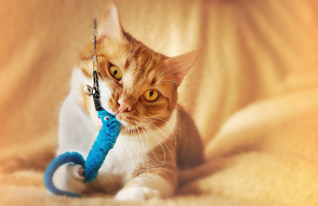 cat toy that moves on its own