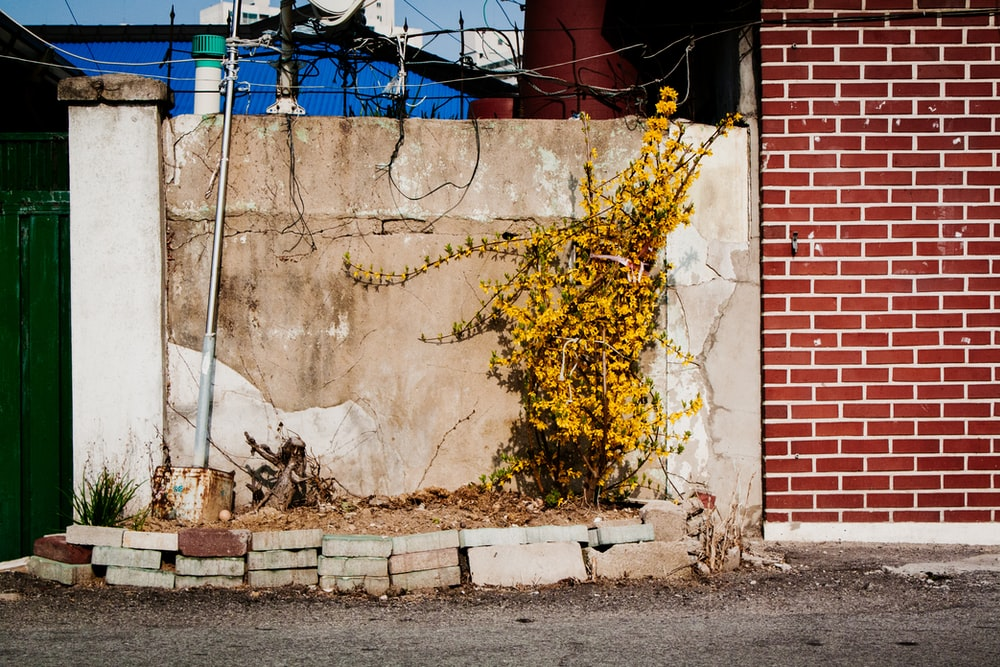 yellow and brown concrete wall