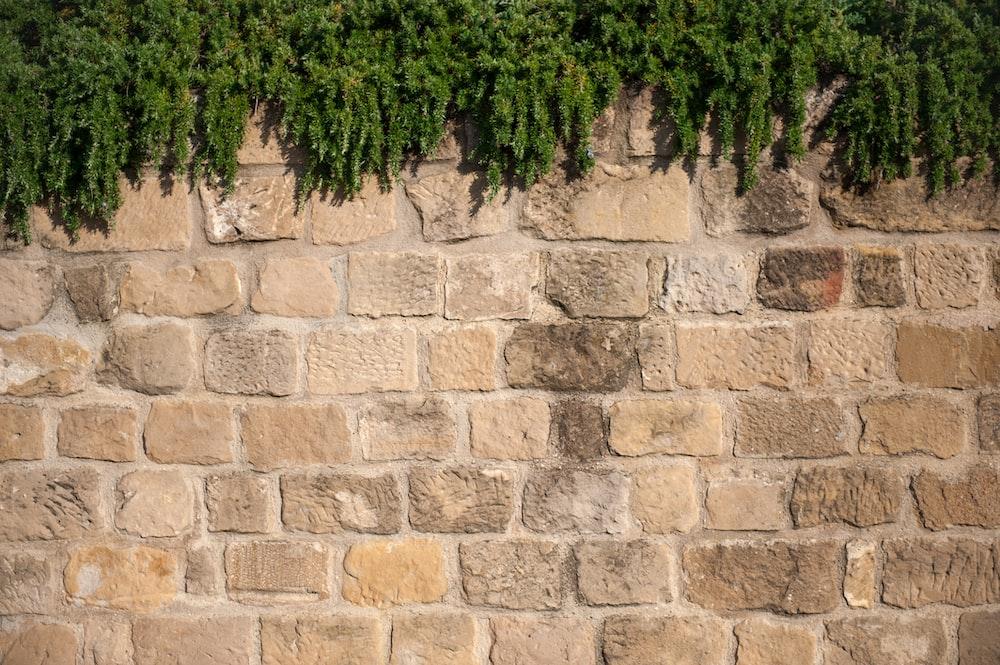 green tree on brown brick wall