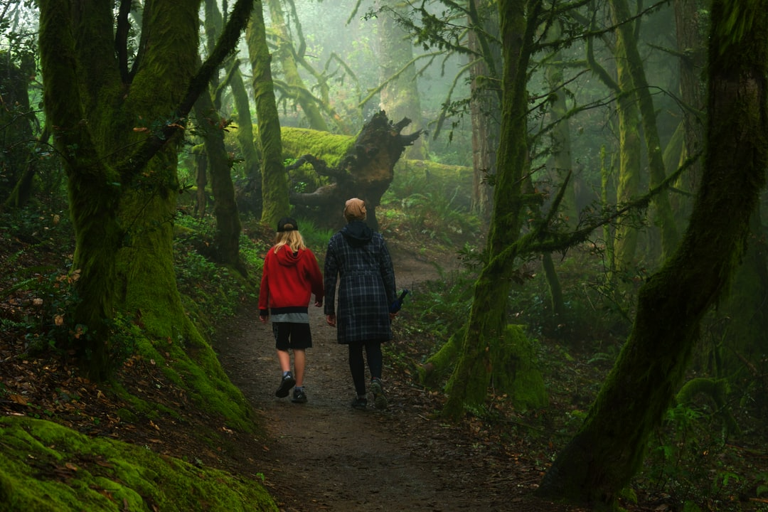 Two people hiking in a magical forest.