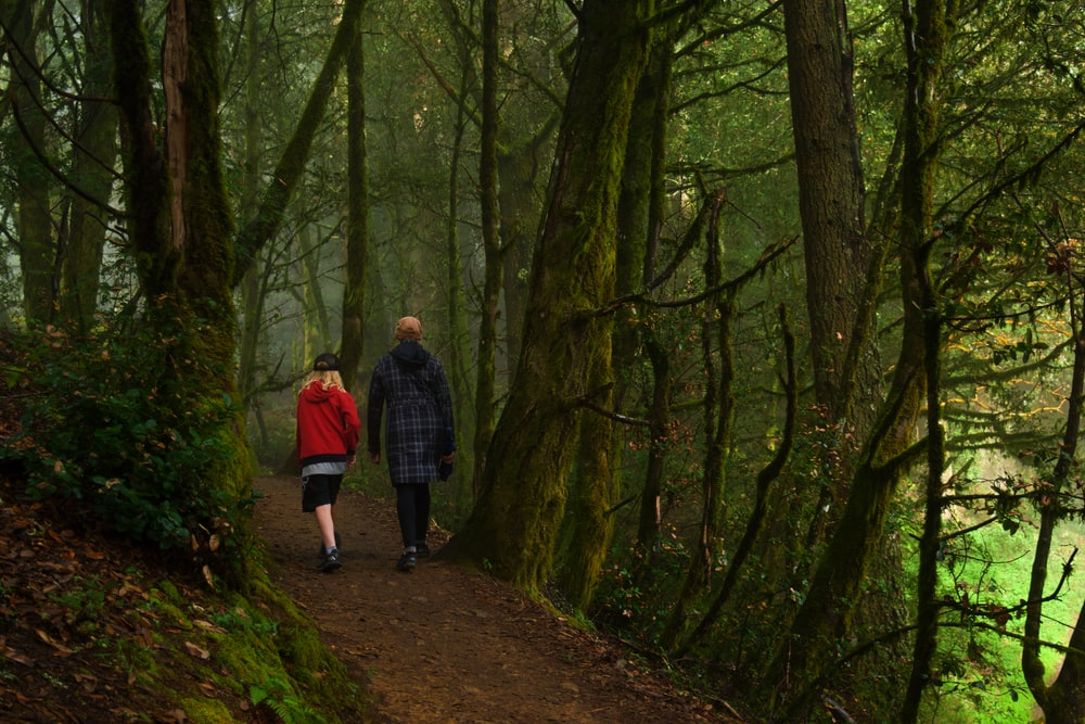 man and woman walking on pathway in between trees during daytime