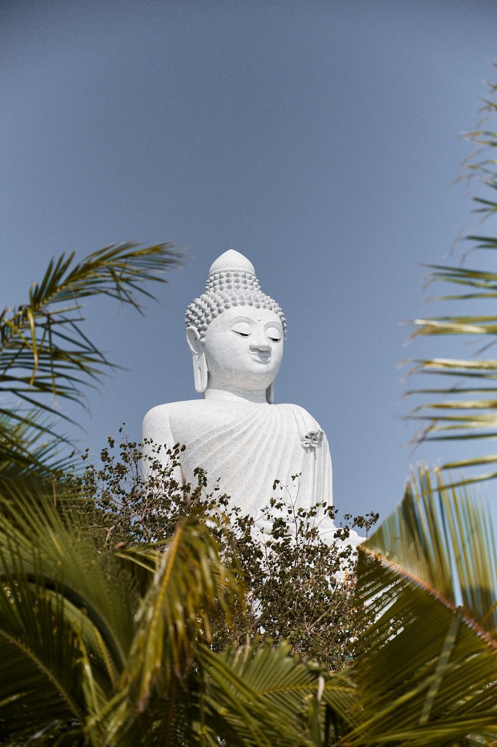 white buddha statue near green palm tree during daytime