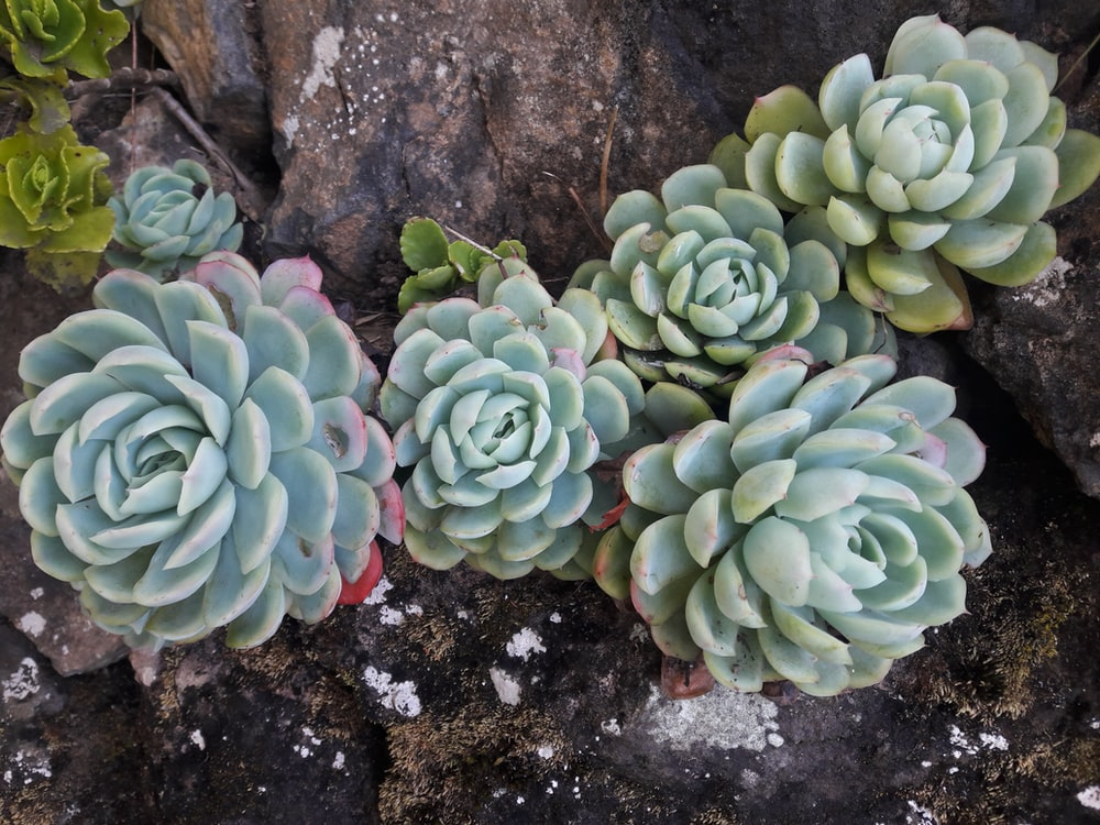 green succulent plant on brown rock