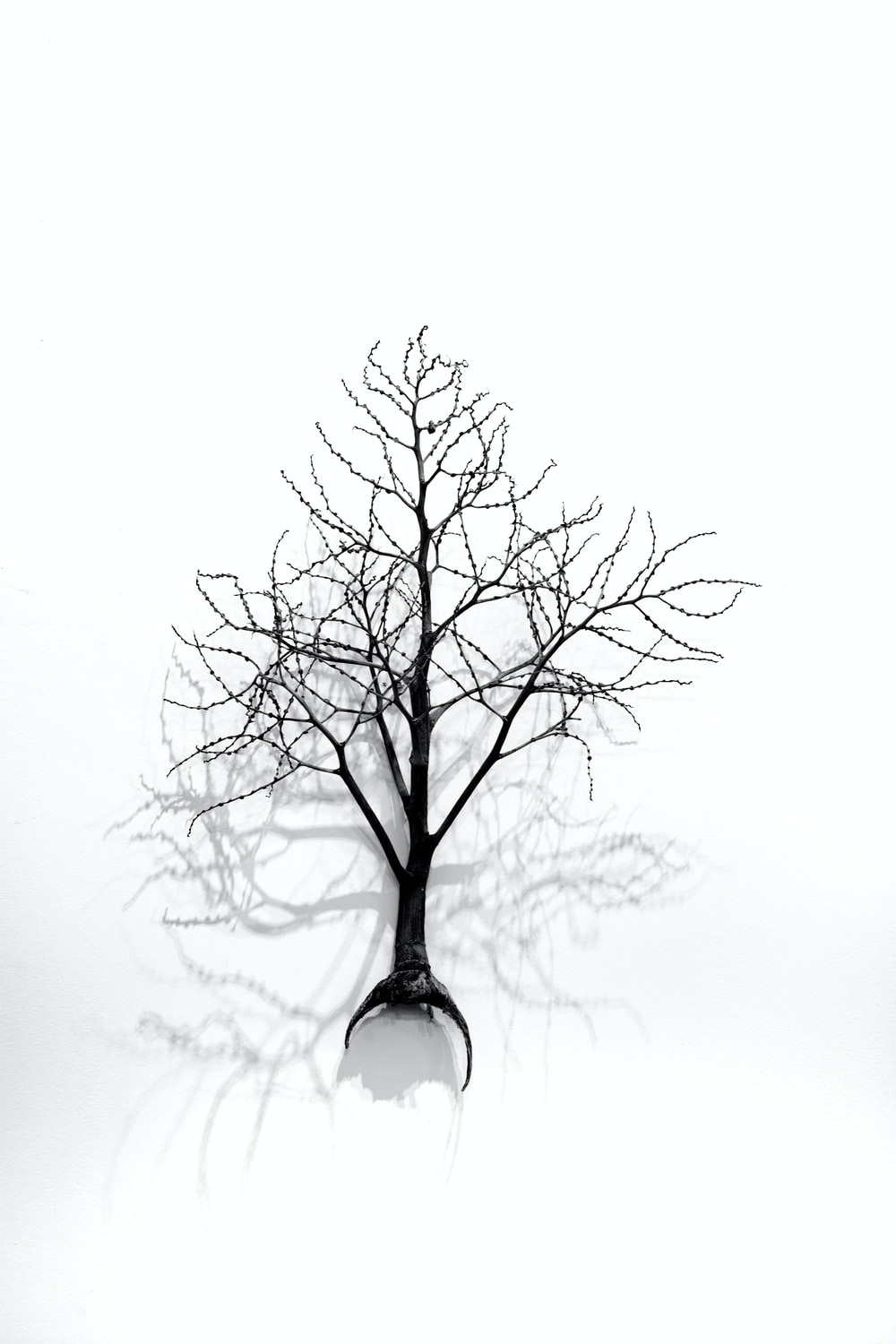 leafless tree in clear glass vase