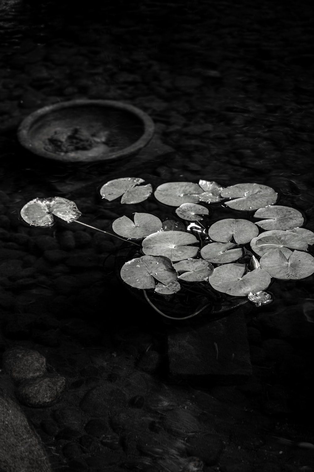 green leaves on water in grayscale photography