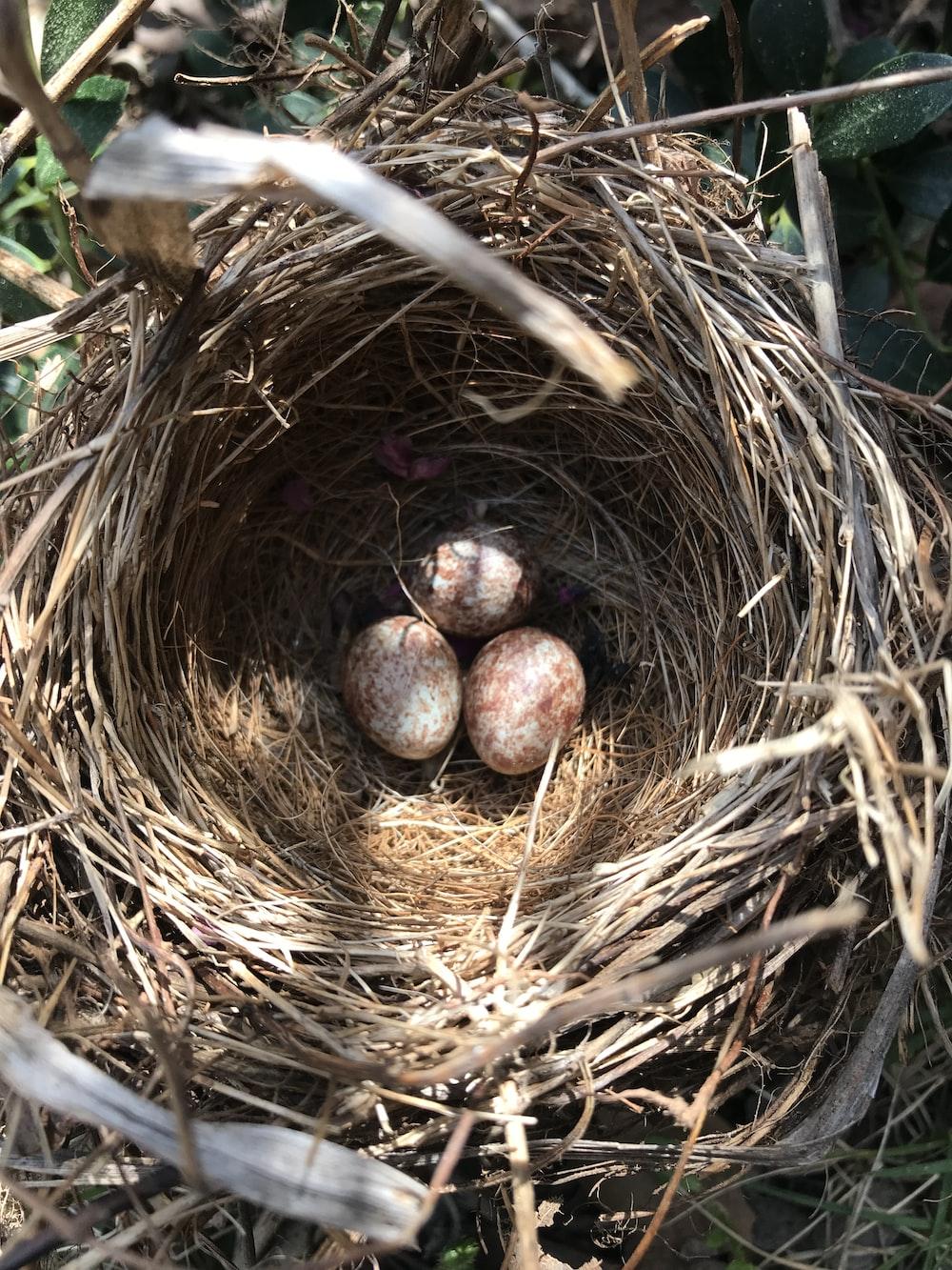 brown round fruit on brown nest