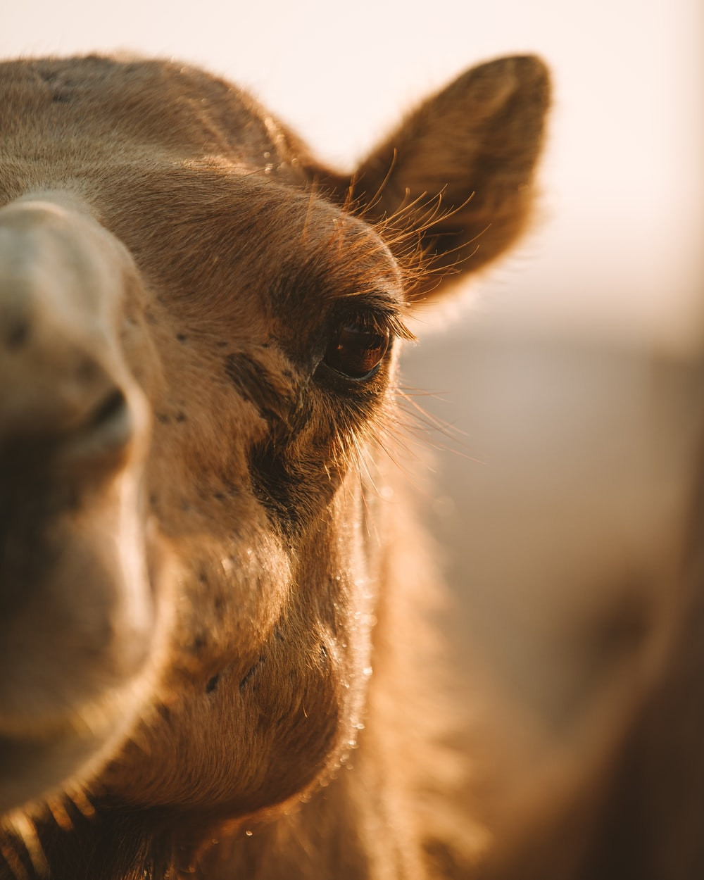 brown horse head in close up photography