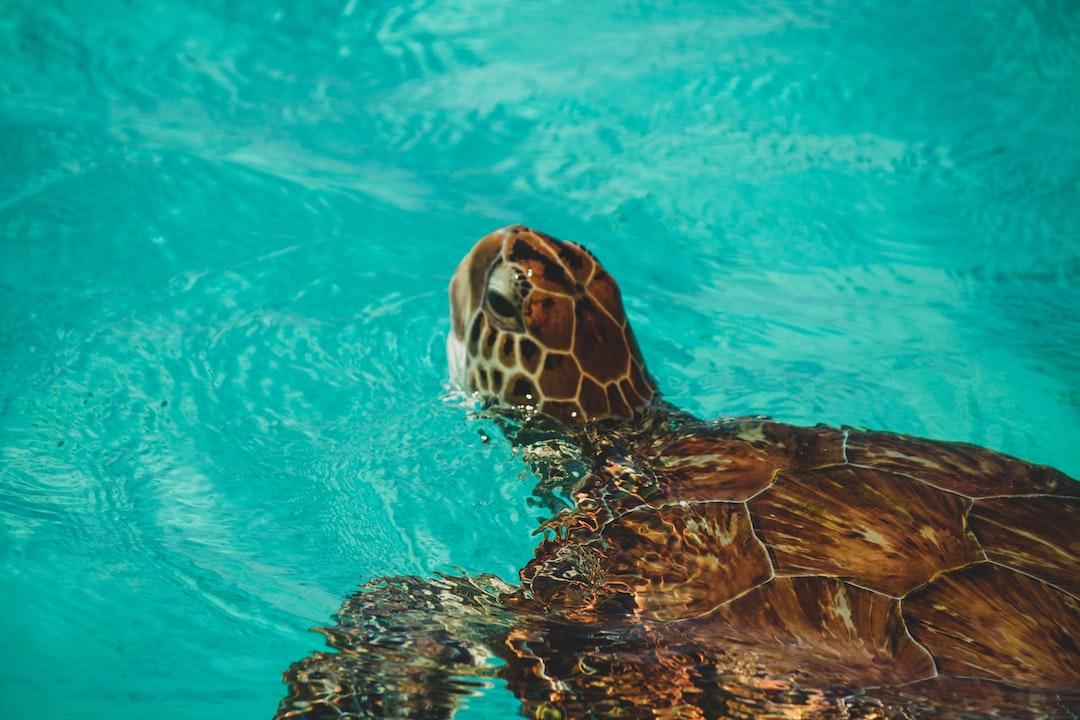 Turtles In Water!  - unsplash