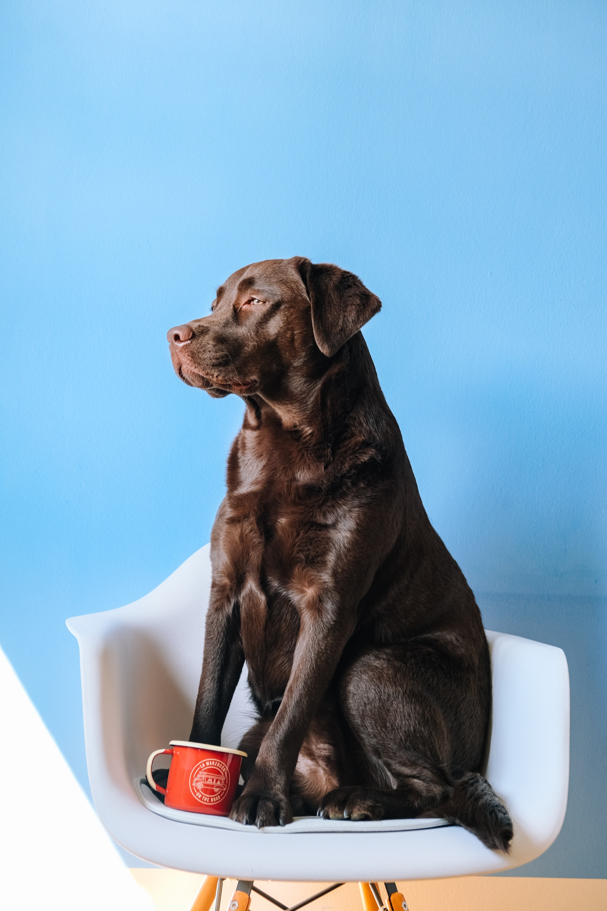 Dog, chair and cup.