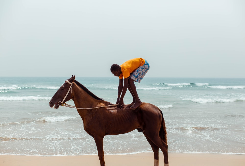 man in blue shirt riding brown horse on beach during daytime