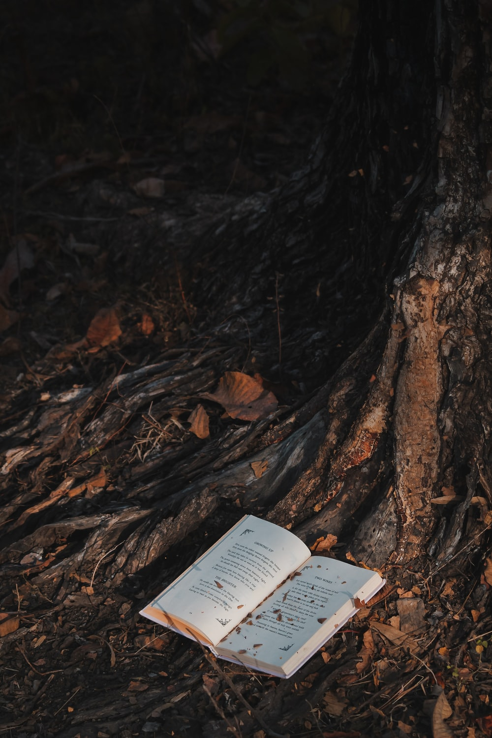 white book on brown tree trunk