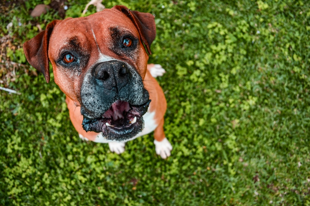 Dog with grass