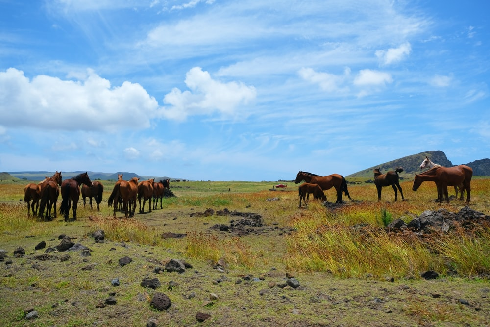 brown horses on green grass field under blue sky during daytime