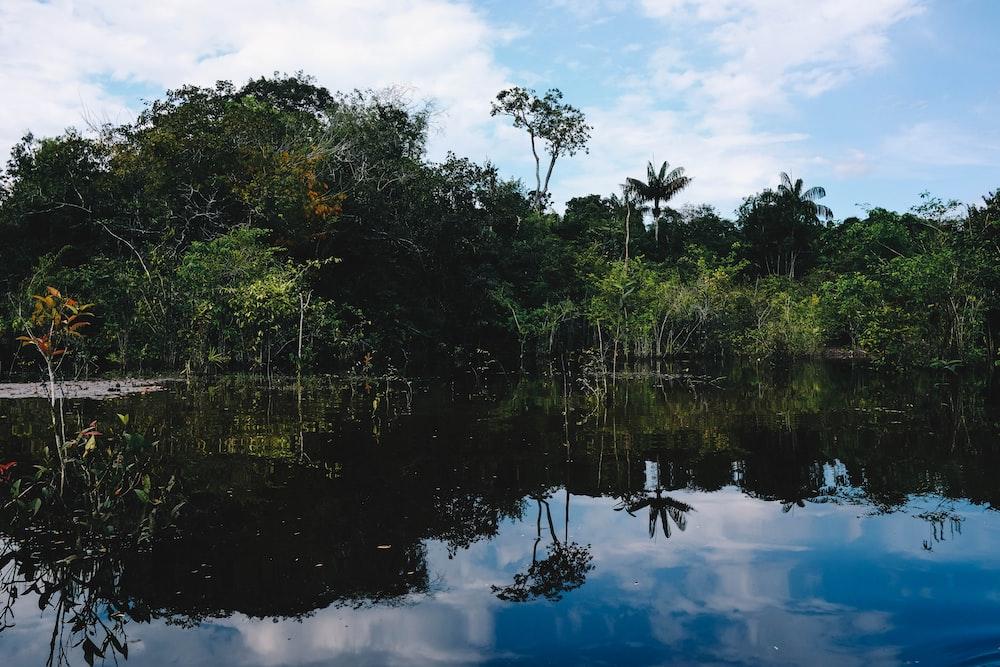 amazon rainforest brazil virtual tour
