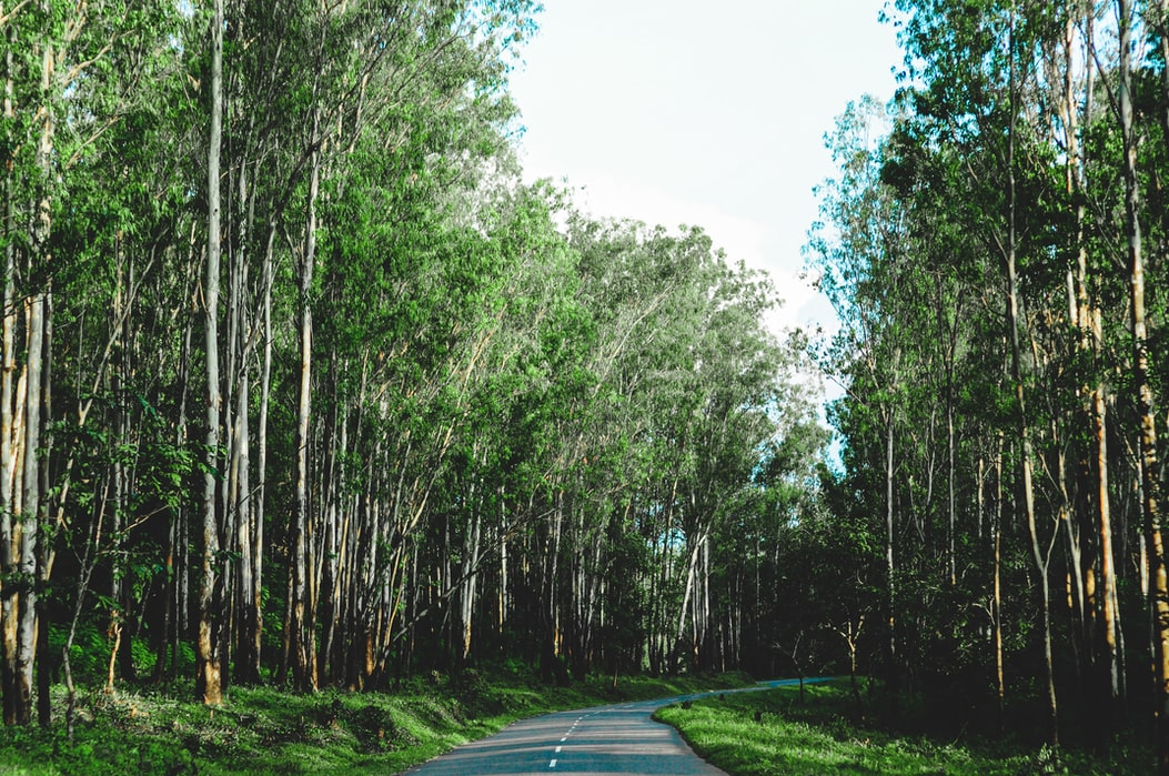 Road to Thekkady