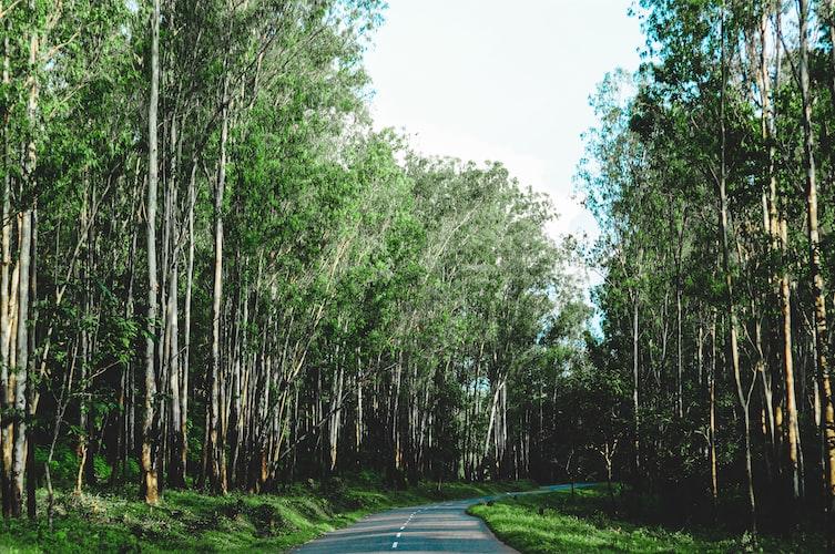 En-route to Wayanad