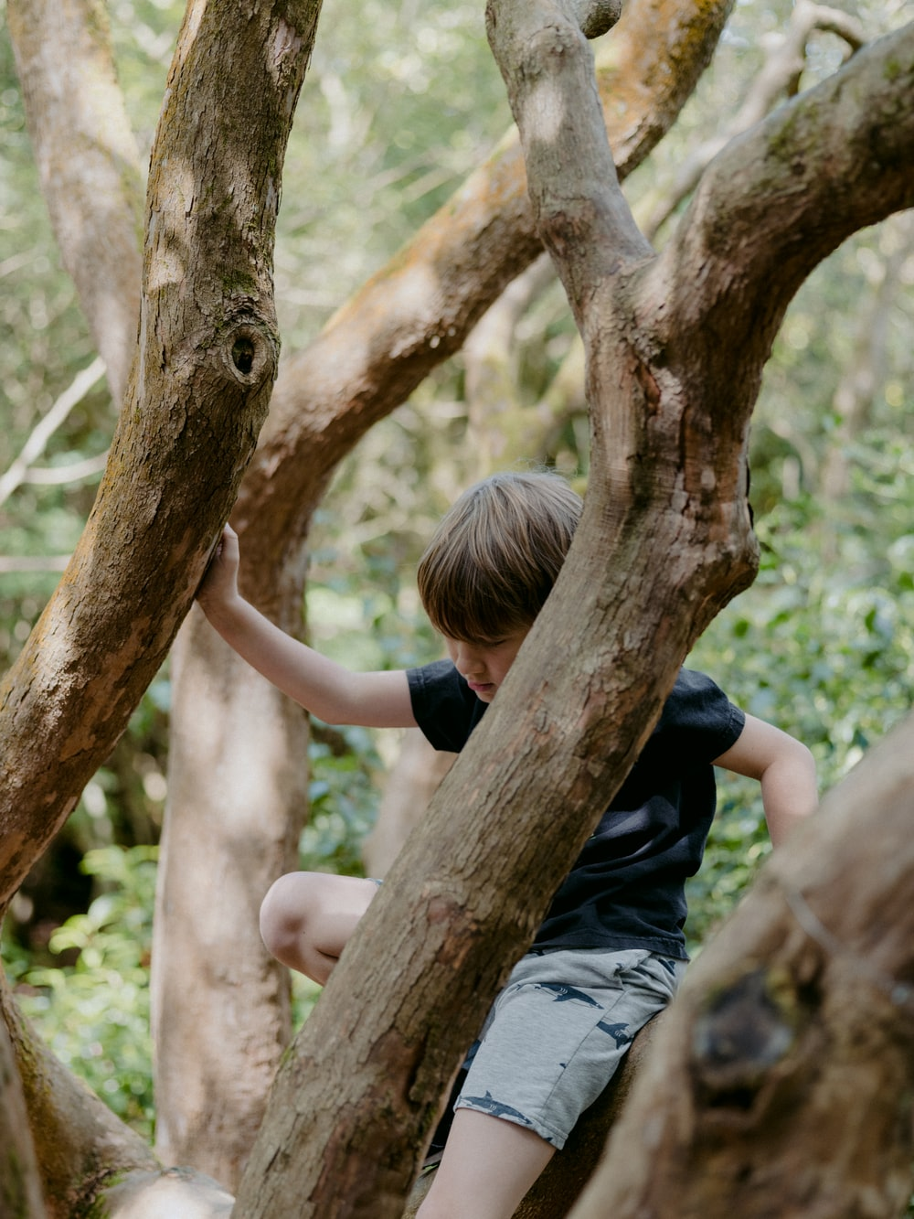 girl in black t-shirt and gray denim jeans climbing on brown tree during daytime
