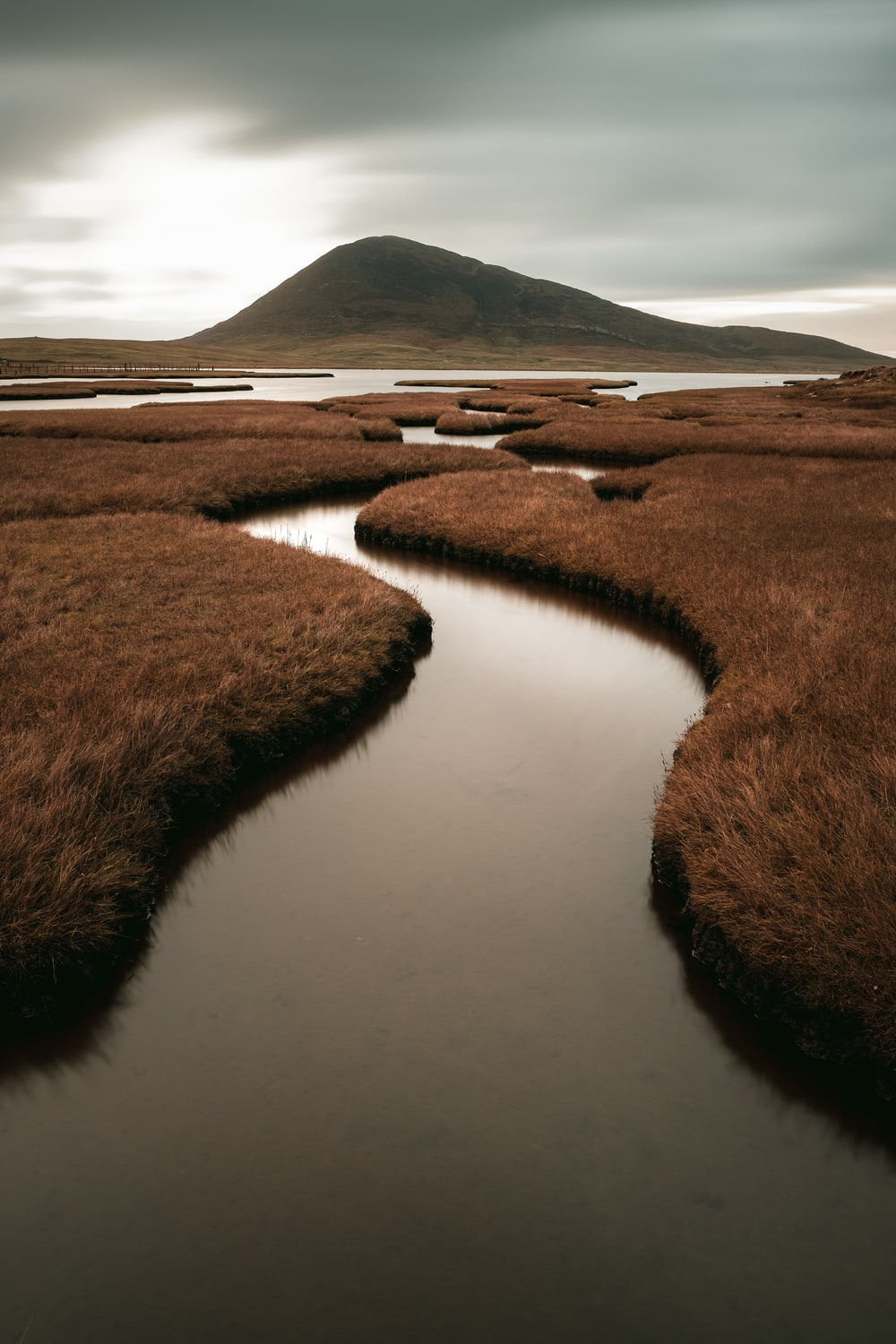 brown grass on body of water