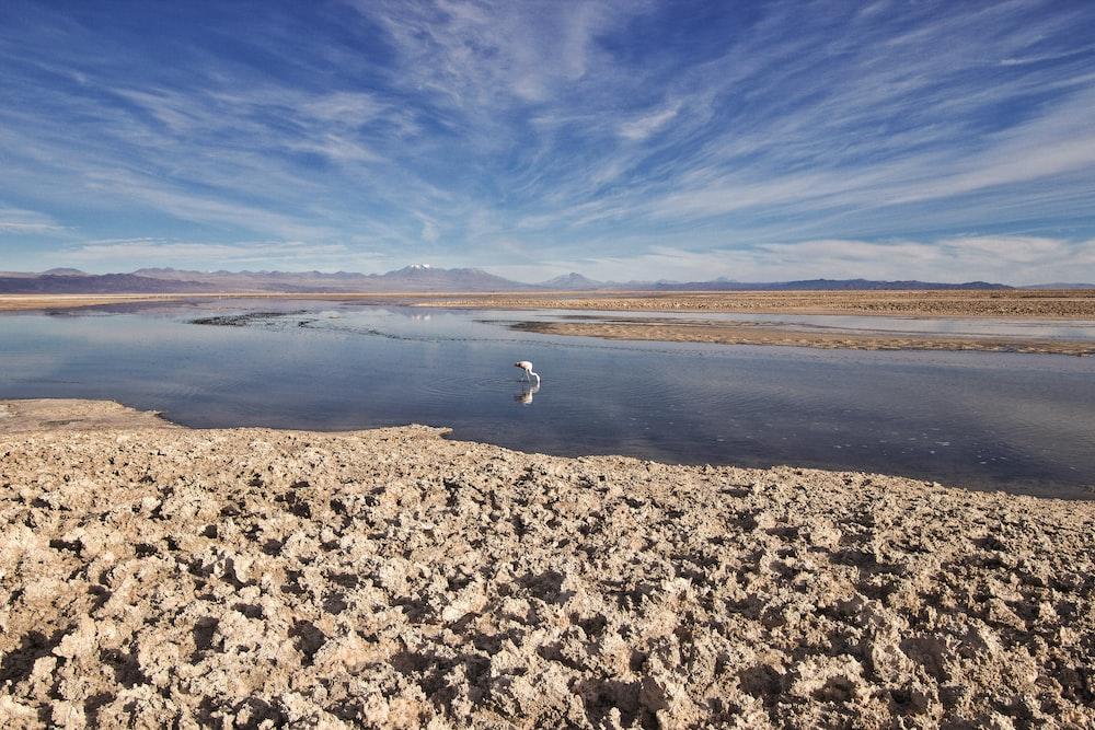white bird on brown sand near body of water during daytime