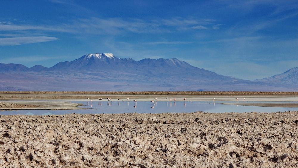 flock of birds on shore near mountain during daytime