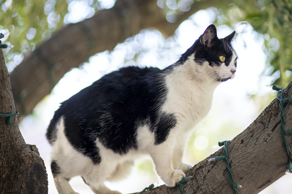 black and white cat on brown tree trunk