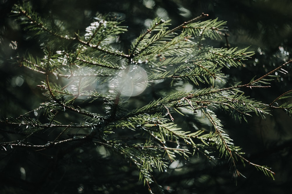 white bird on green tree