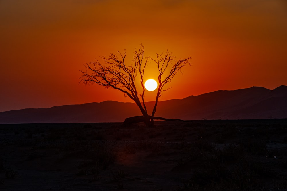 bare tree on hill during sunset