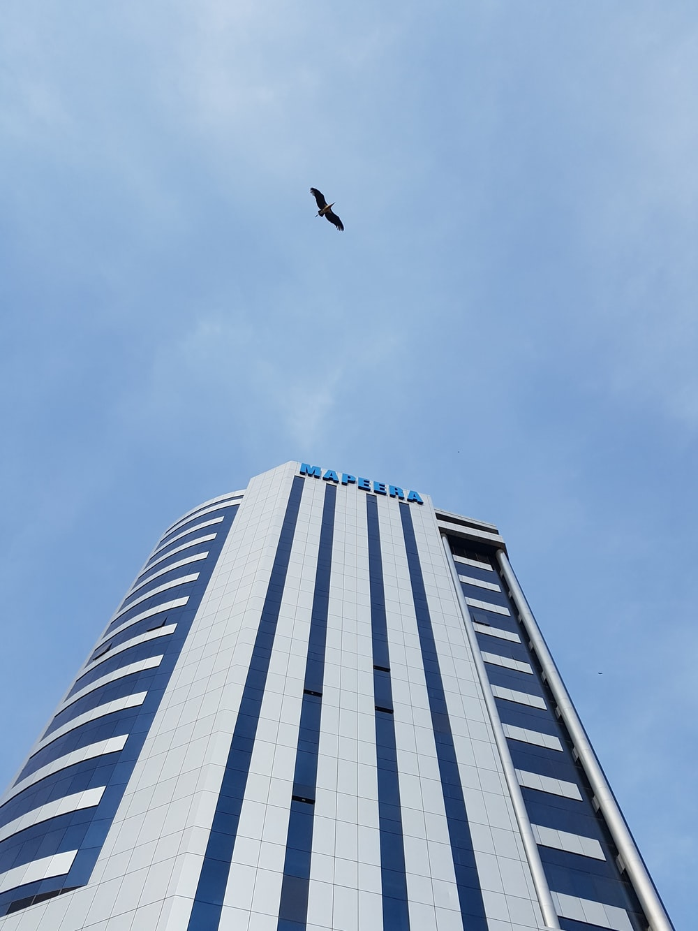 black bird flying over white and blue building during daytime