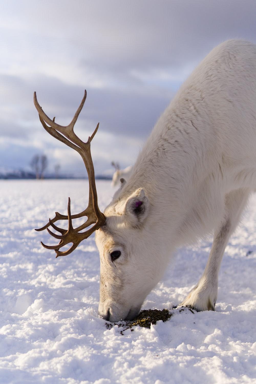 white horse eating brown tree branch during daytime