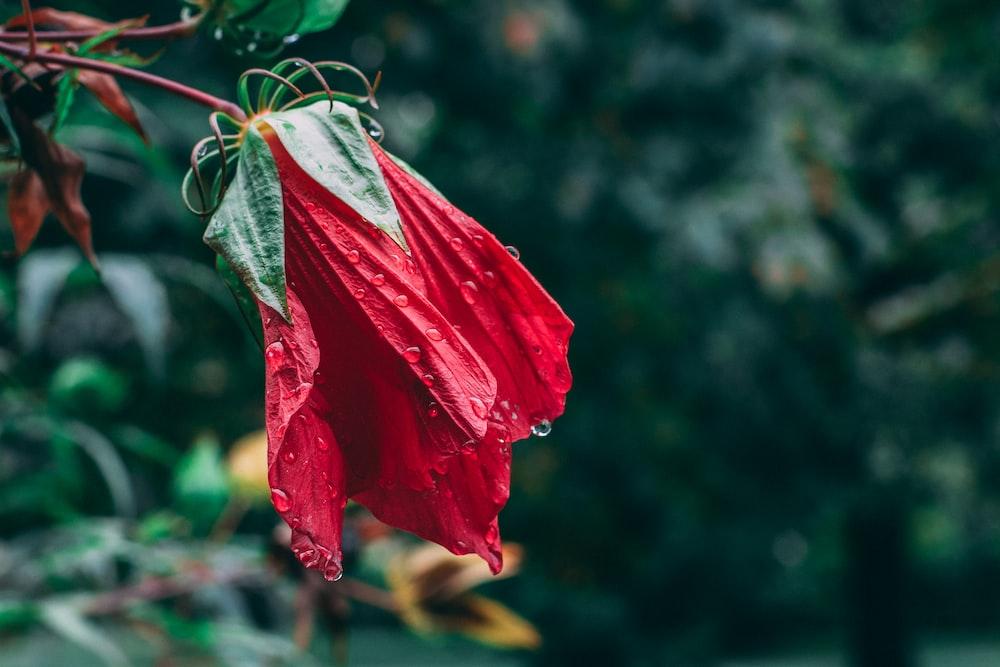 red and white flower in tilt shift lens