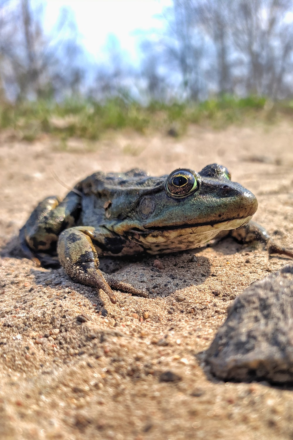 green frog on brown sand during daytime