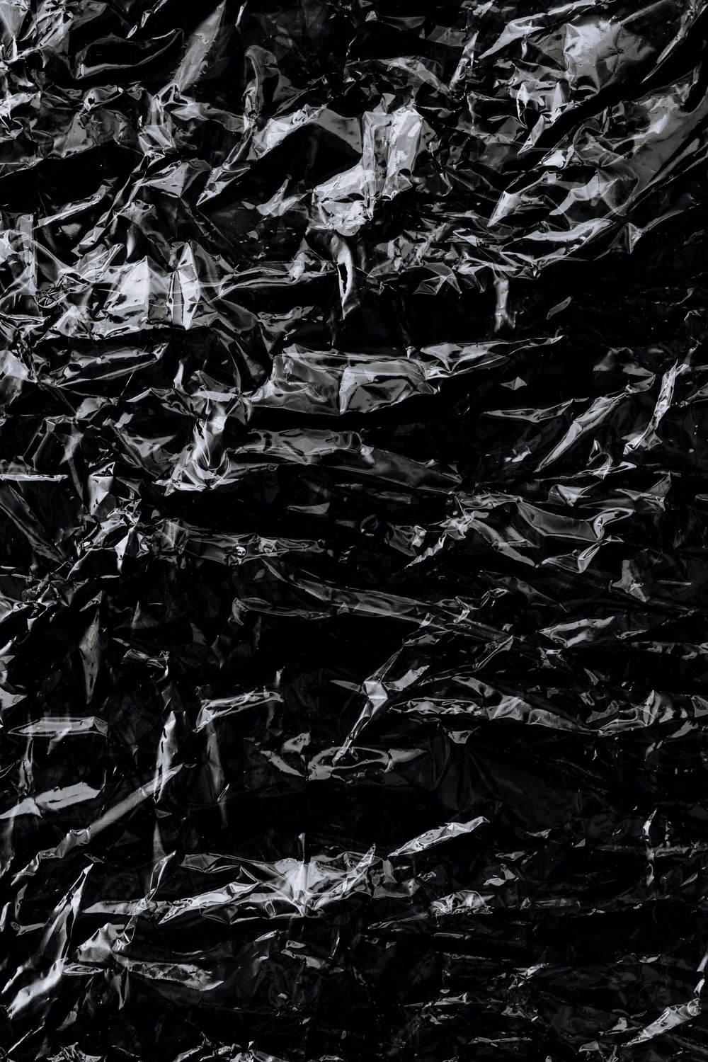 black and white dried leaves