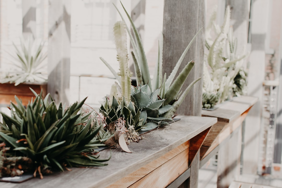 Succulents  - unsplash