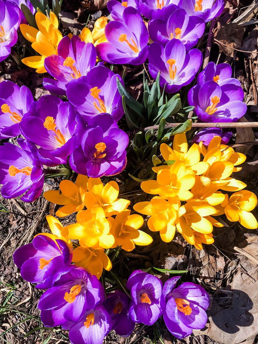 purple and yellow flowers on brown soil
