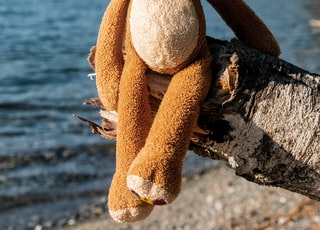 brown and white bear plush toy on black rock near body of water during daytime