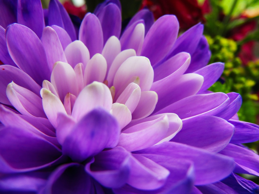 This is a close-up of a bright purple and blue flower