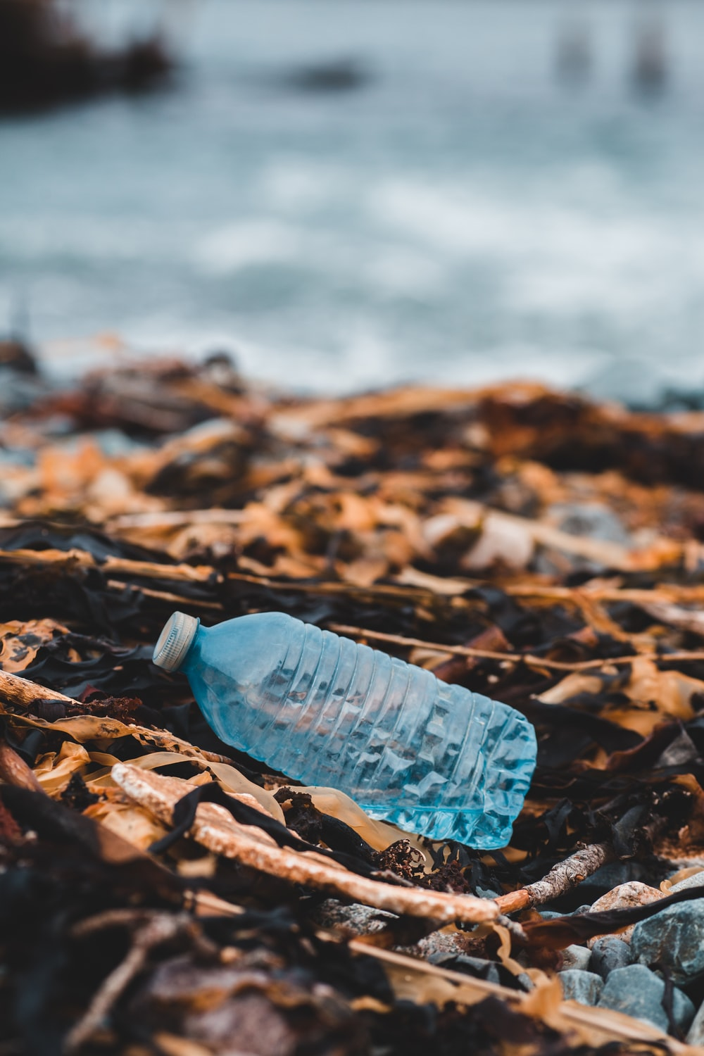 blue plastic bottle on brown dried leaves