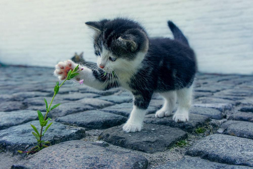 black and white cat on gray concrete floor
