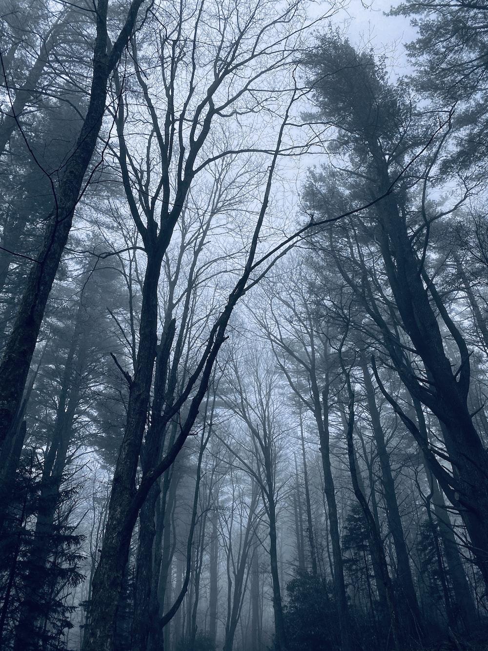 bare trees under white sky during daytime