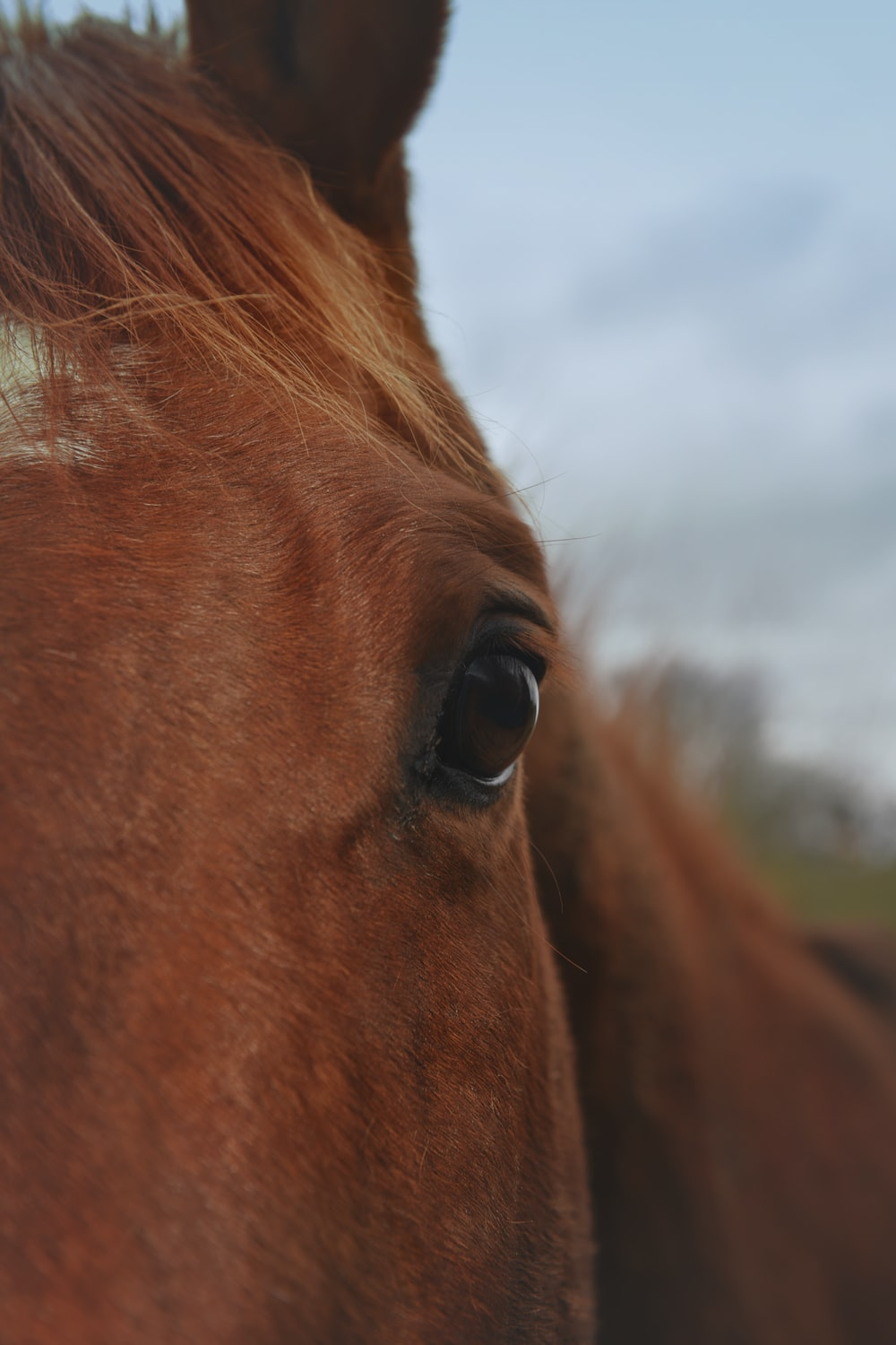 brown horse with green grass field in the distance