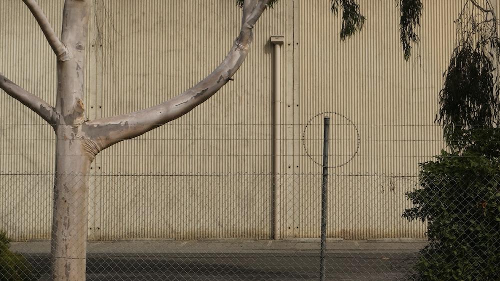 brown tree trunk near brown metal fence