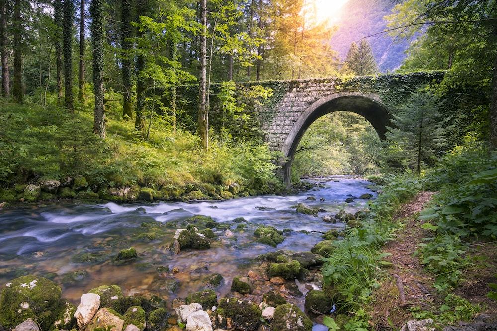river under bridge during daytime