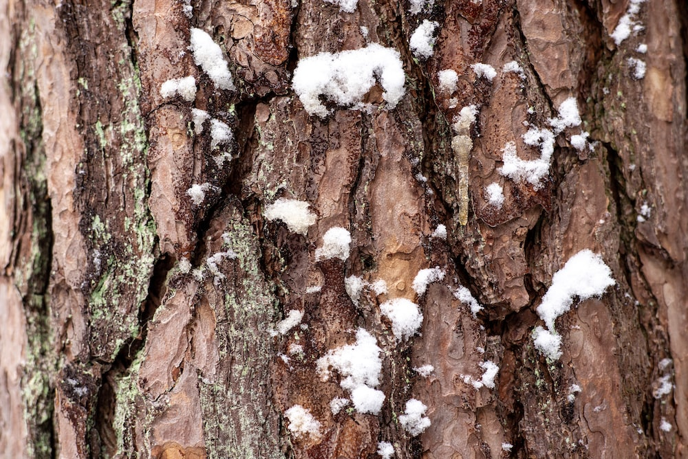 brown and white tree trunk