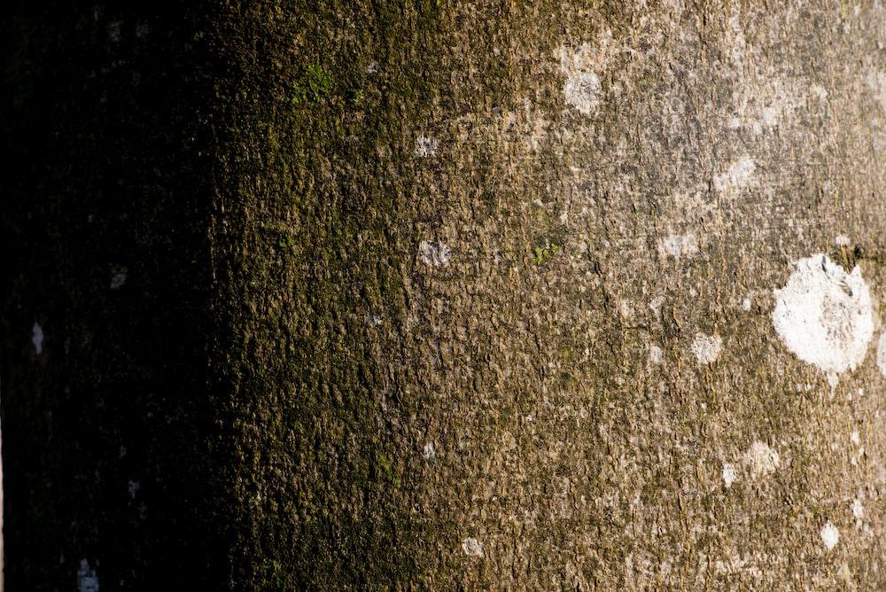 green grass on gray soil