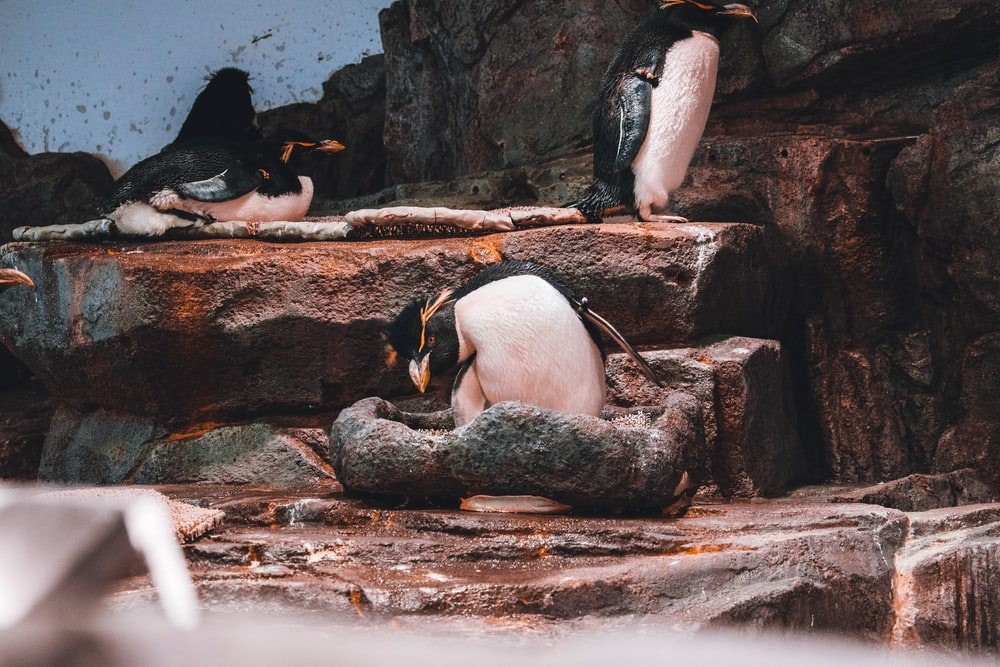 penguins on brown rock during daytime