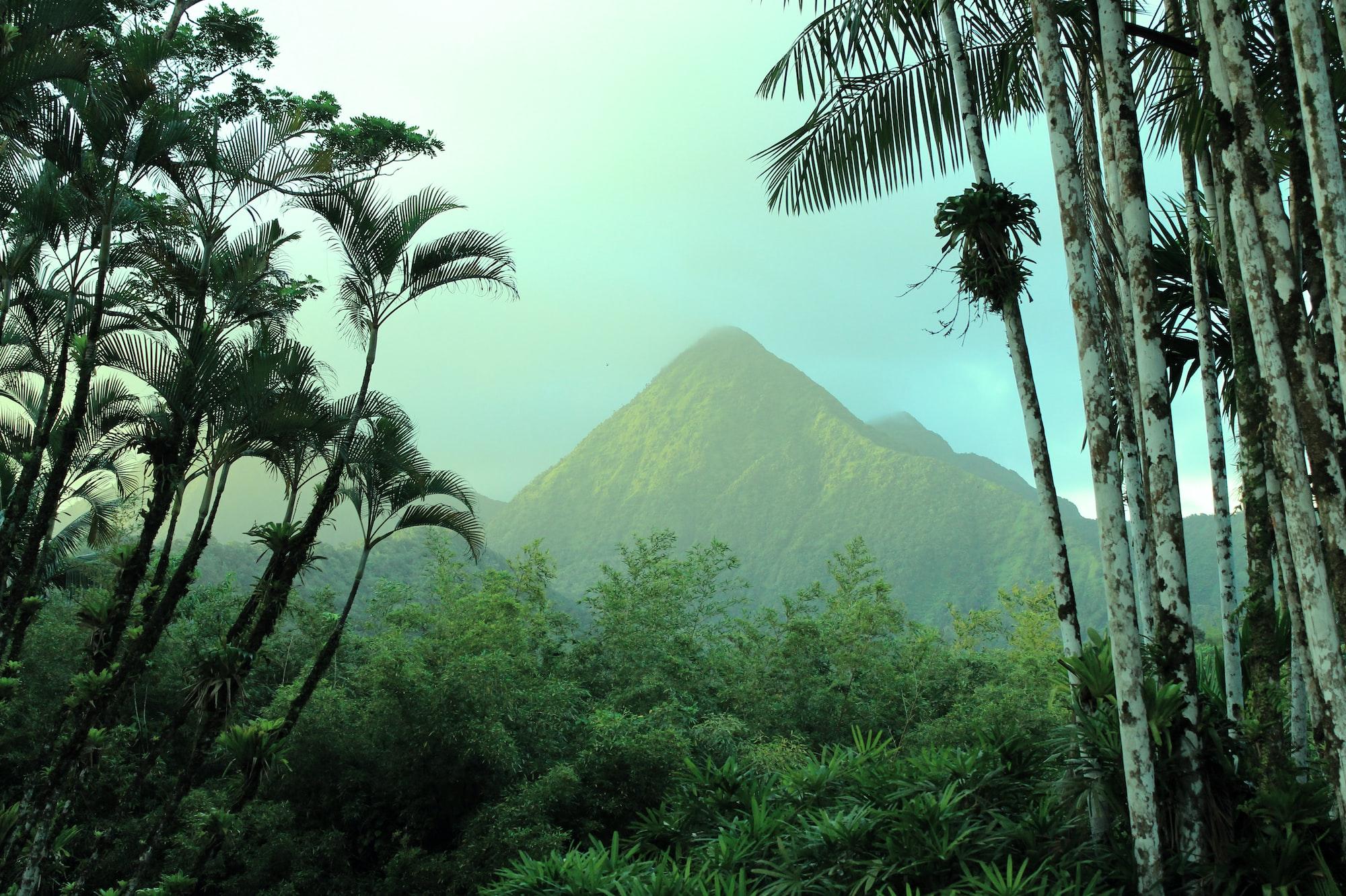 Palmiers et montagnes dans le jardin de Balata en Martinique