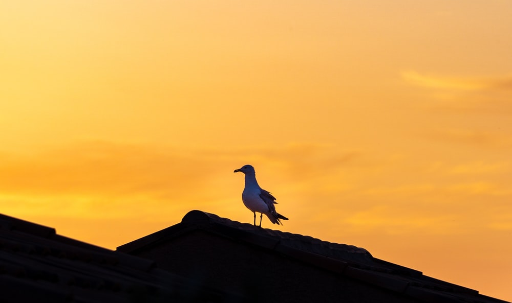 white bird on brown roof during daytime