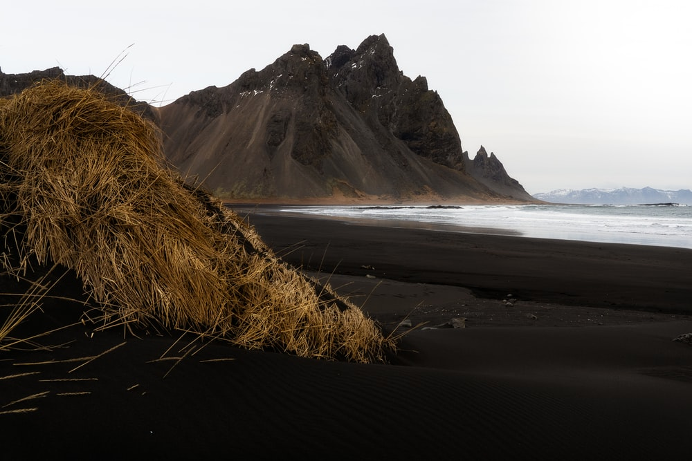brown grass on seashore near mountain during daytime