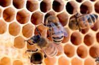 Money Hives honey stories