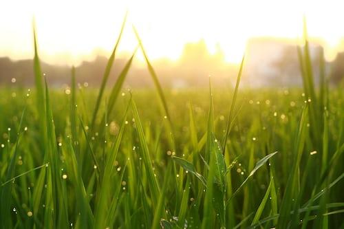 artificial lawn brisbane